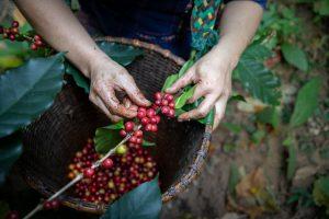 worker coffee farmer