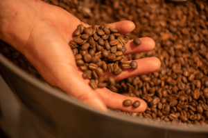 Roasted beans | The Grind Roasters